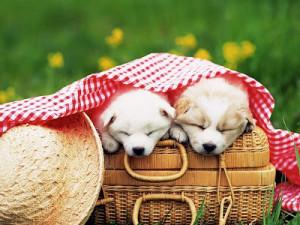выбрать щенка