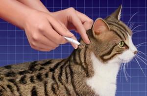 Средство от паразитов для кошек