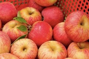 яблоки купить в СПб